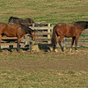 (L-R): Stormy Liberal and Patch munching on hay. <br /> Old Friends near Georgetown, Ky., on Dec. 11, 2020.
