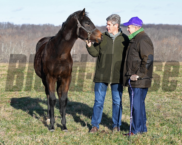 Brutus and Catesby Clay at Runnymede farm on Dec. 8, 2016, in Cynthiana, Ky., with Medaglia d'Oro filly from Bizzy Caroline (born 3/16/16)