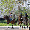 Caption: L-R: 2018 Paynter o/o Hallie and Beth Colt,  American Heiress filly, 2018 Frosted o/o Ingenue Filly. <br /> Training at Silver Springs Training, part of Silver Springs Stud, near Lexington, Ky.,  on April 8, 2020 Silver Springs in Lexington, KY.