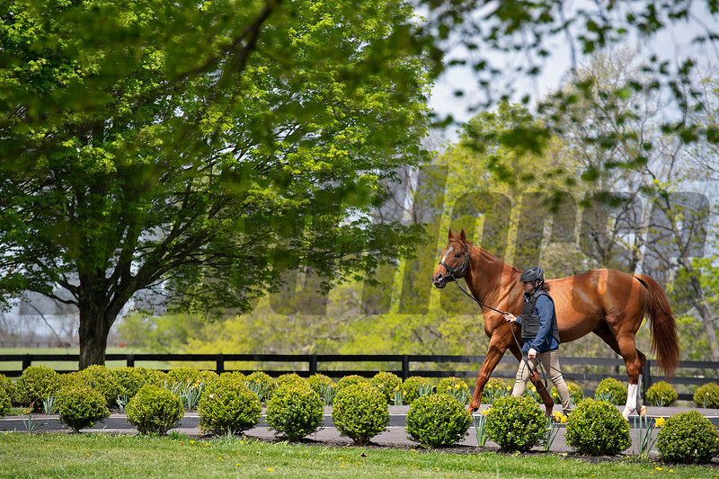 Curlin with his groom Christina Zurick returning from the breeding shed<br /> Scenes at Hill 'n' Dale (Xalapa) near Paris, Ky., on April 14, 2021.