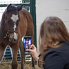 In his stall as BloodHorse managing editor Claire Crosby takes video of the colt.<br /> Flawless with her 2021 colt, a full brother to Authentic, at Hurricane Place farm near Cynthiana, Ky., on March 3, 2021.