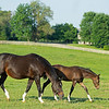 Caption: with her 2020 Tapit filly<br /> Hollywood Story with her 2020 Tapit filly born March 2 at George Krikorian's Starwood Farm near Versailles, Ky., on July 3, 2020 Starwood Farm in Versailles, KY.