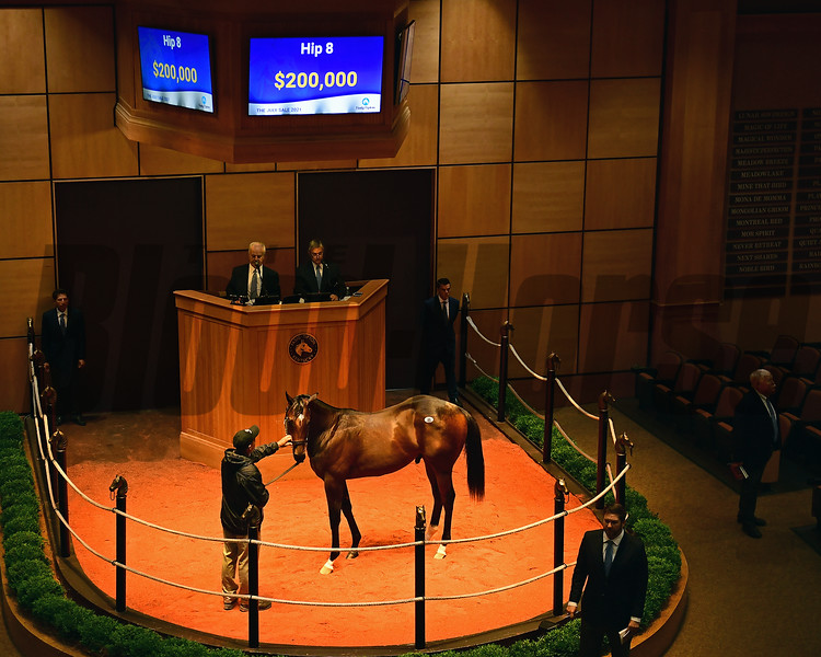 Hip 8 colt by Army Rule out of Congarette at Gainesway<br /> Scenes, people and horses at The July Sale at Fasig-Tipton near Lexington, Ky. on July 13, 2021.