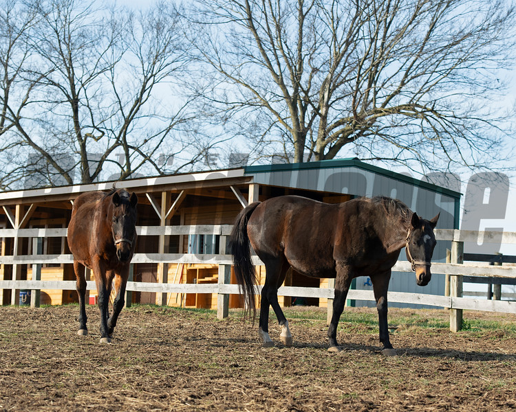 (L-R): Gold Round and Mystery Trip<br /> Old Friends near Georgetown, Ky., on Dec. 11, 2020.