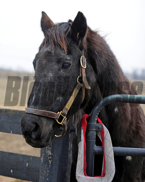 Fortunate Prospect at 30 years of age at Old Friends near Georgetown, Ky. on Jan. 31, 2011.<br /> Photo by Anne M. Eberhardt