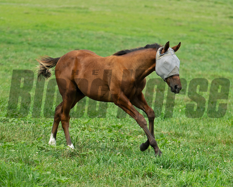 2021 City of Light colt out of Numero d' Oro<br /> Broodmare Numero d'Oro (the dam of Wit and in foal to Authentic), at Sunday Morning Farm, Ky. on July 13, 2021.