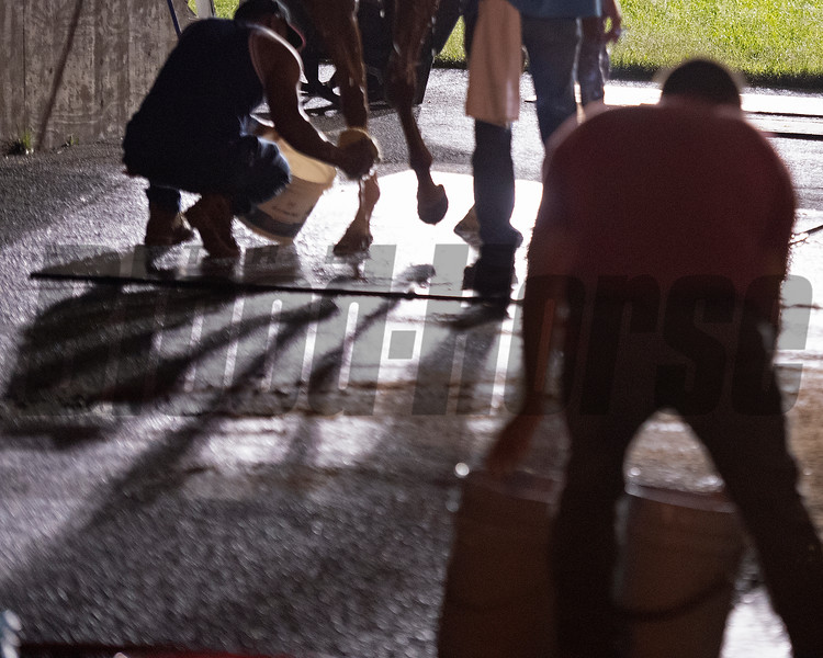 Caption: morning bath scene, dancing shadows<br /> Kentucky Derby and Oaks training at Churchill Downs near Louisville, Ky., on Aug. 30, 2020 Churchill Downs in Louisville, KY.