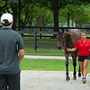 Tanya Johnson shows Hip 202 yealring colt from her Red Gables Stud consignment. Scenes, people and horses at The July Sale at Fasig-Tipton near Lexington, Ky. on July 10, 2021.