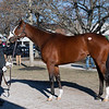 Hip 675 Saguaro Row with Blake-Albina. <br /> Fasig-Tipton February Winter Mixed sale on Feb. 7, 2021.