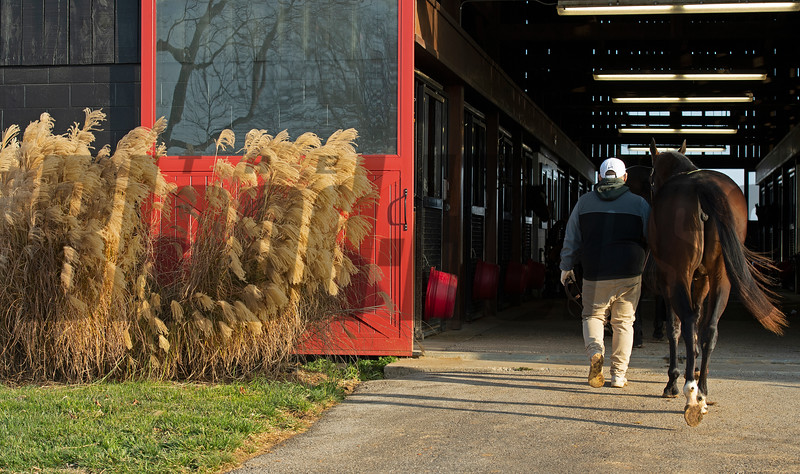 A yearling goes in the barn at Jim and Susan Hill's Margaux Farm near Midway, Ky., on Dec. 8, 2020.