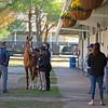Hip 228 Uni at ELiTE Sales<br /> Sales horses at The November Sale at Fasig-Tipton Kentucky in Lexington, Ky. on November 8, 2020.