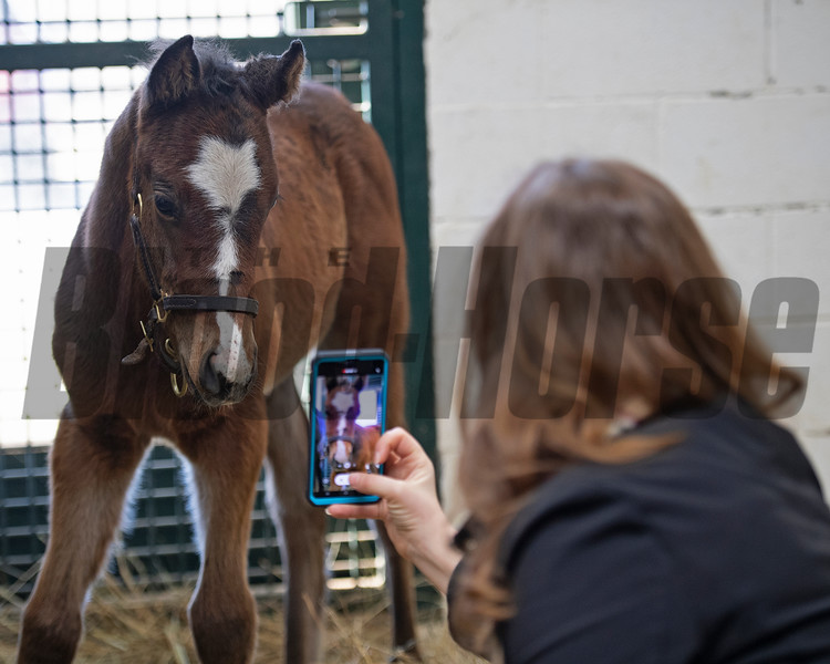 In his stall as BloodHorse managing editor Claire Crosby takes video of the colt.<br /> Flawless with her 2021 colt, a full brother to Authentic, at Hurricane Place farm near Cynthiana, Ky., on March 3, 2021. Photo: Anne M. Eberhardt