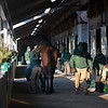 Scene in the Lane's End shedrow.<br /> Keeneland January Sales at Keeneland near Lexington, Ky., on Jan. 13, 2021.