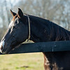 Discreet Hero<br /> Old Friends near Georgetown, Ky., on Dec. 11, 2020.