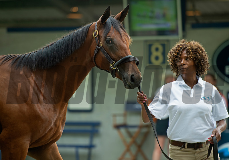Hip 174 filly by City of Light out of Grand Sofia at Bluewater Sales. <br /> Scenes, people and horses at The July Sale at Fasig-Tipton near Lexington, Ky. on July 10, 2021.