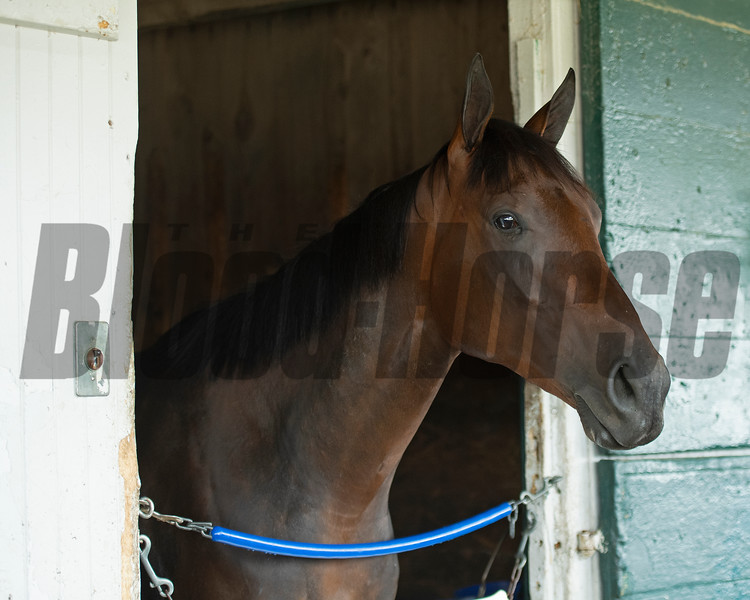 Famed, a 2-year-old half-sister to Essential Quality by Uncle Mo,  at Keeneland on July 2, 2021.