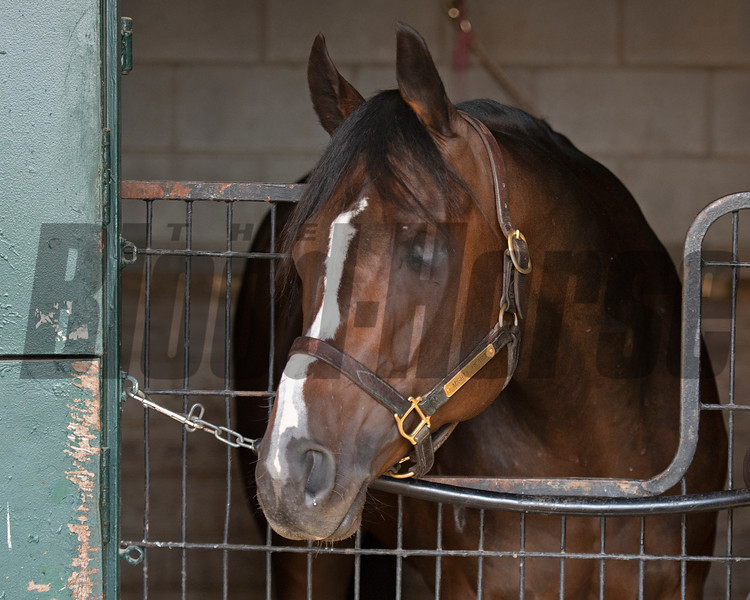 Mighty Heart, Canada's Horse of the Year, at Keeneland near Lexington, Ky., on April 16, 2021. .