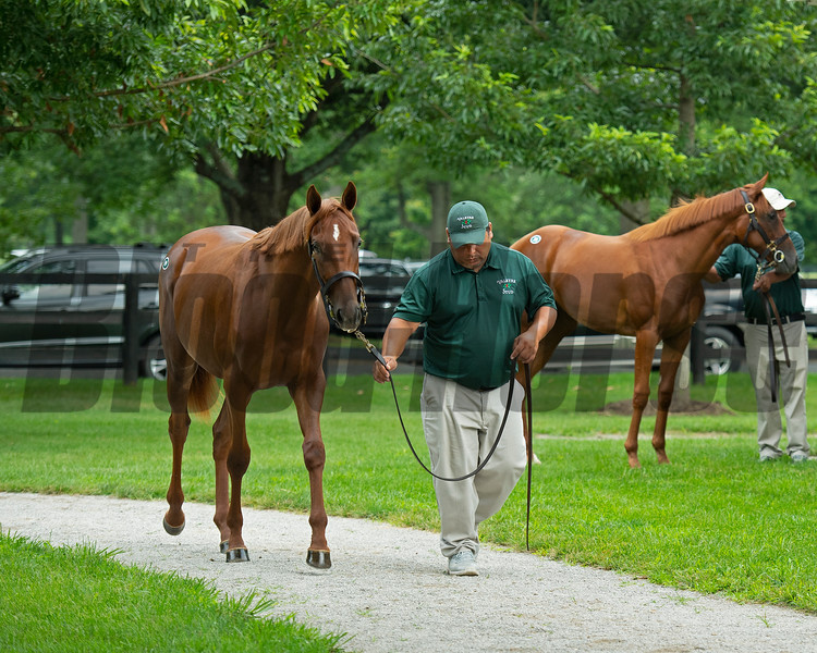 Hip 19 filly by Collected out of Film Idol at Valkyre Stud. <br /> Scenes, people and horses at The July Sale at Fasig-Tipton near Lexington, Ky. on July 10, 2021.