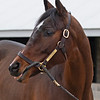 Hip 254 Getouttamyway from South Point <br /> Keeneland January Sales at Keeneland near Lexington, Ky., on Jan. 9, 2021.