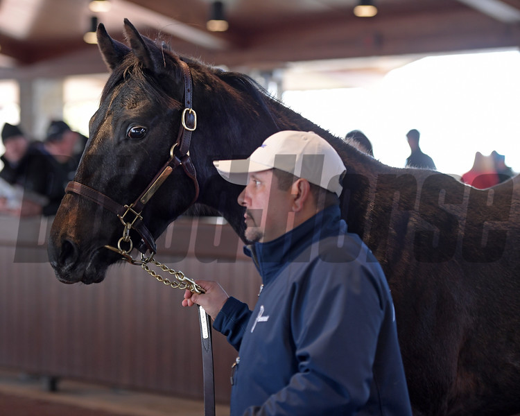 Hip 533 colt by American Pharoah from Mekko Hokte brings $1m from MV Magnier and was consigned by Paramount Sales, agen