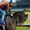 Pirate's Punch<br /> Breeders' Cup horses at Keeneland in Lexington, Ky. on November 5, 2020.