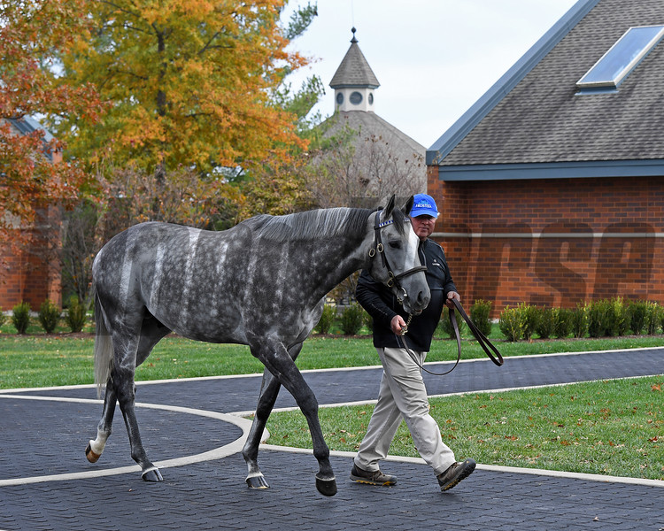 Caption:<br /> Godolphin stallions at Jonabell near Lexington, Ky., on Dec. 2, 2016.