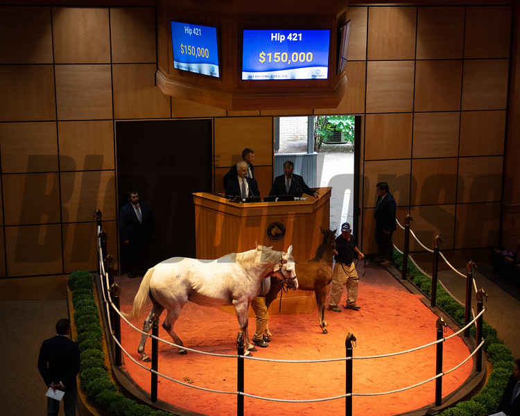 Hip 421 Too Much Prada with Violence filly from STuart Morris, agent<br /> Scenes, people and horses at The July Sale at Fasig-Tipton near Lexington, Ky. on July 12, 2021.