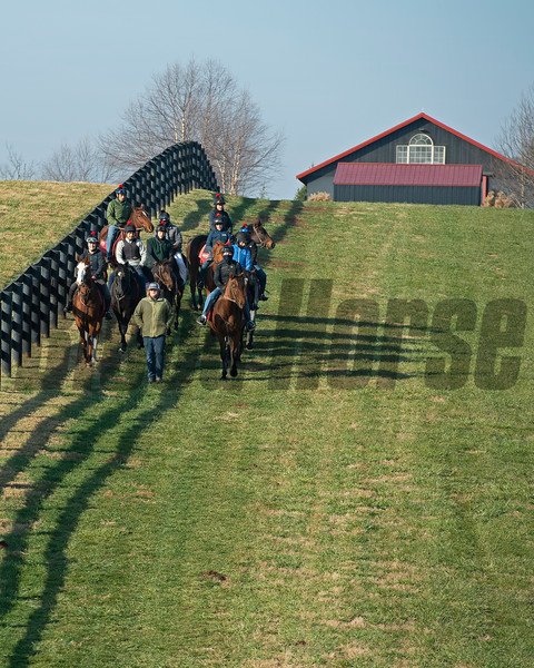 Training process under Dermot Littlefield at Jim and Susan Hill's Margaux Farm near Midway, Ky., on Dec. 8, 2020.