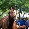 Hip 647 Front Run the Fed from Elite Sales<br /> Scenes, people and horses at The July Sale at Fasig-Tipton near Lexington, Ky. on July 12, 2021.