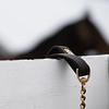 scene with shank on fence as horse arrives<br /> Keeneland January Sales at Keeneland near Lexington, Ky., on Jan. 9, 2021.