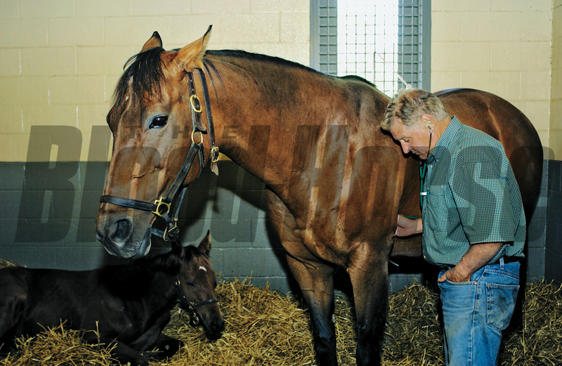 Dr. Doug Byars examines a mare on August 5, 2003.<br /> Photo by Anne M. Eberhardt
