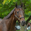 Hip 642 Fearless at Elite Sales.<br /> Scenes, people and horses at The July Sale at Fasig-Tipton near Lexington, Ky. on July 10, 2021.