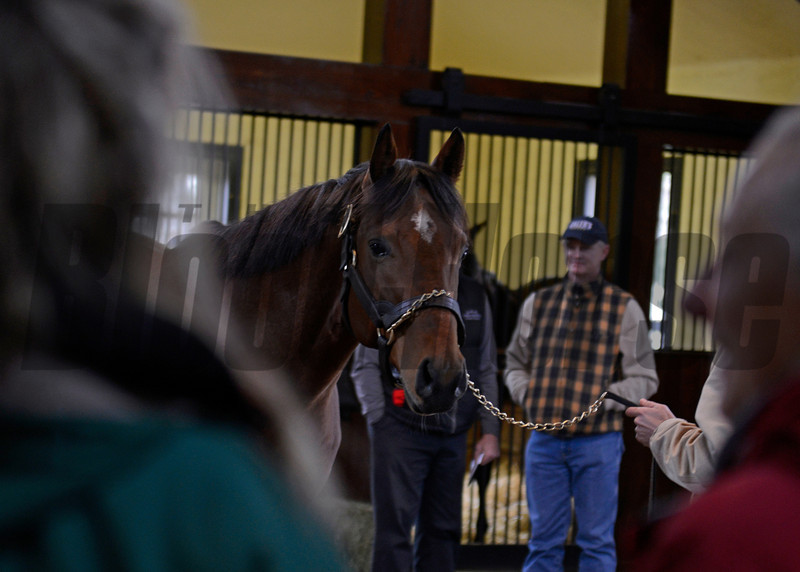 Caption: Caleb's Posse with owner Everett Dobson (background) looking on during open house at Three Chimneys on Jan. 6, 2013.<br /> Keeneland January sale at Keeneland in Lexington, Ky. on Jan. 7, 2013.<br /> KeeJan2013 Sales MonOrigs1 image941<br /> Photo by Anne M. Eberhardt