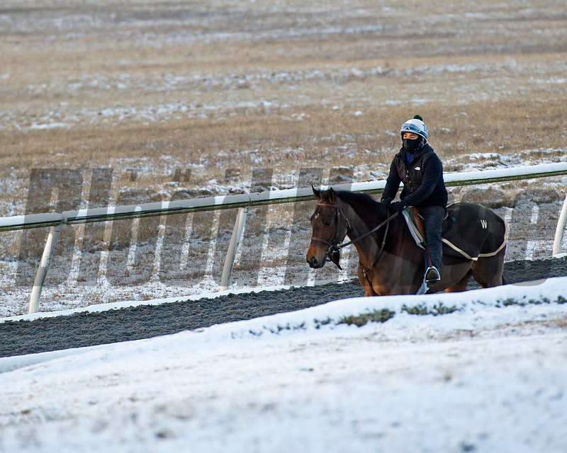 Training at WinStar Farm near Versailles, Ky., on Jan. 7, 2017.