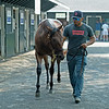 Hip 102 filly by American Pharoah out of Funfair from Paramount Sales, agent<br /> Saratoga training and sales scenes at Saratoga Oklahoma track and Fasig-Tipton in Saratoga Springs, N.Y. on Aug. 6, 2021.
