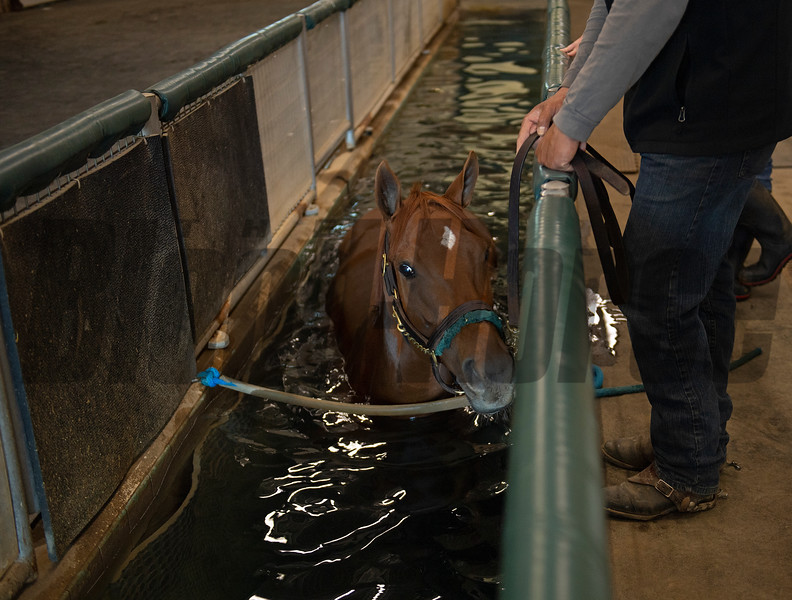 Aqua-tred therapy session. Monomoy Girl taking a break from training and at the WinStar training center on June 16, 2021.