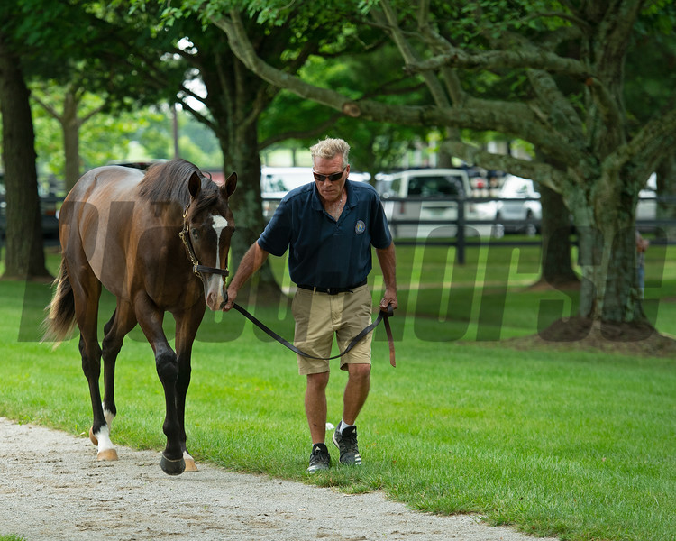 Hip 208 colt by Hard Spun out of Lots o' Lex from War Horse Place.<br /> Scenes, people and horses at The July Sale at Fasig-Tipton near Lexington, Ky. on July 10, 2021.