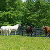 (L-R): Octave, Pretty City Dancer, Delightful Quality, and Villenesca. Delightful Quality, dam of Essential Quality, is in foal to Tapit at the James Lane division of Godolphin at Jonabell on June 15, 2021.