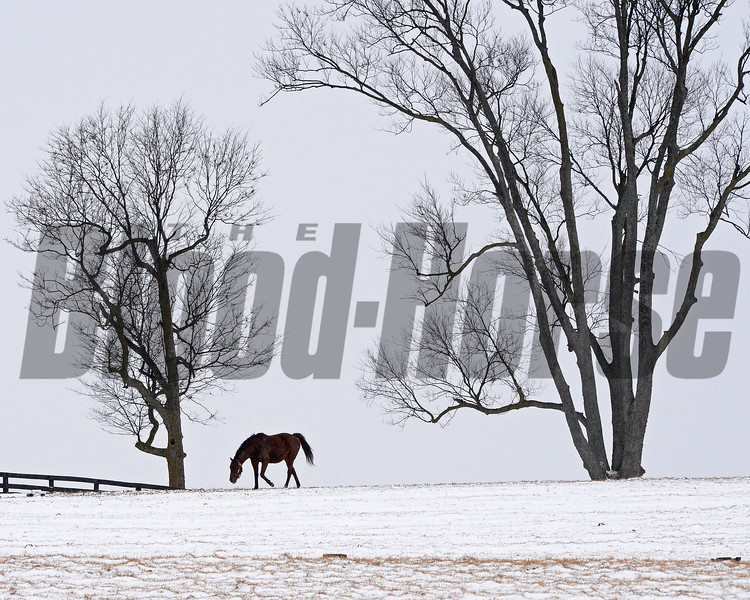 Mare at WinStar Farm in Versailles, Ky. on Jan. 13, 2018.