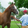 HIp 433 Classic Melody at Taylor Made.<br /> Scenes, people and horses at The July Sale at Fasig-Tipton near Lexington, Ky. on July 11, 2021.