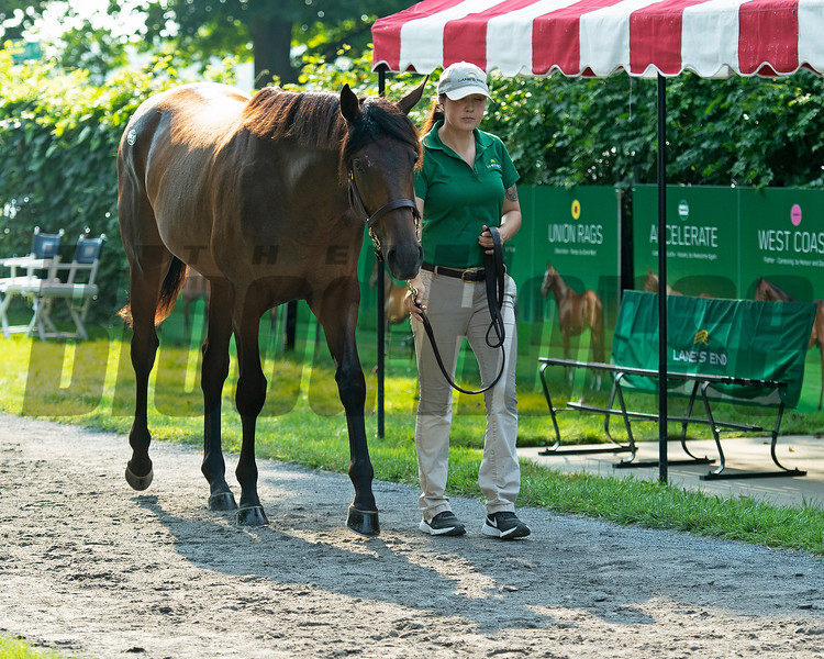 Hiip 155 Roadlesstraveled filly bby Quality Road out of More Hennessy at Lane's End, agent<br /> Saratoga sales scenes at Fasig-Tipton in Saratoga Springs, N.Y. on Aug. 7, 2021.