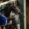 Caption: walking shedrow after training<br /> Midnight Bisou at Keeneland on May 2, 2020 Keeneland in Lexington, KY.