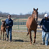 Virgina Key with Jorge Ramirez, right, and Adam Corndorf with the mare's first foal, a Medaglia d'Oro filly<br /> Scenes at Blue Heaven Farm near Versailles, Ky. on Feb. 23, 2021.