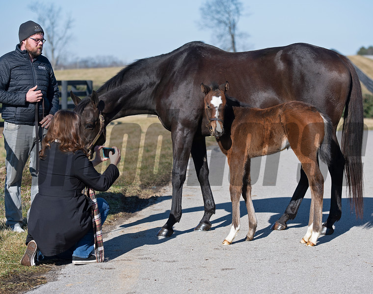 Flawless with her 2021 colt, a full brother to Authentic, born on Feb. 7 at Hurricane Place farm near Cynthiana, Ky., on March 3, 2021. Photo: Anne M. Eberhardt