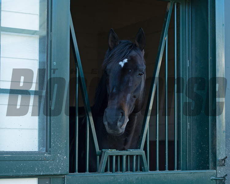 Mor Spirit<br /> Eclipse Award scenes at Spendthrift Farm near Lexington, Ky., on Dec. 22, 2020.