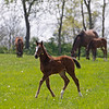 Caption: Filly born 2/15/20 by Street Boss out of the mare Stage Direction<br /> Rob Tillyer and Dixiana Farm scenes near Lexington, Ky.,  on April 18, 2020 Dixiana in Lexington, KY.