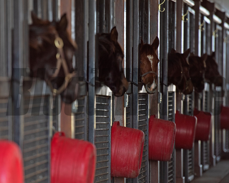Weanlings at Jim and Susan Hill's Margaux Farm near Midway, Ky., on Dec. 8, 2020.