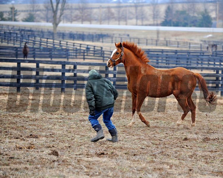 Caption: Having fun, Blowen goes into the paddock and runs with Marquetry.<br /> Michael Blowen and the horses at Old Friends retirement home near Georgetown, Ky. on Jan. 31, 2011.<br /> Origs1 image5444<br /> Photo by Anne M. Eberhardt