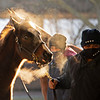Cold temps (low 20s) as horses are shown.<br /> Keeneland January Sales at Keeneland near Lexington, Ky., on Jan. 10, 2021.