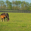 Caption:<br /> Mares, foals, yearlings, scenes at Ashview Farm near Versailles, Ky., on April 28, 2020 Ashview Farm in Versailles, KY.